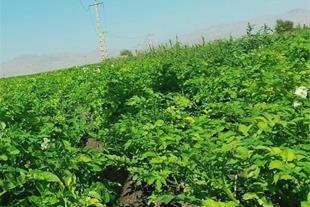 اجاره زمین کشاورزی