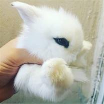 خرگوش های مینیاتوری واکسینه 7 سانتی