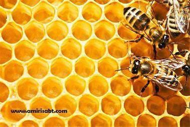 طرح توجیهی پرورش زنبور عسل - 1