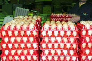 فروش عمده تخم مرغ محلی