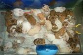 فروش همسترهای یک ماه و نیمه