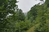 تور جنگل ابر (ویژه نیمه شعبان)
