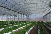 نایلون سه لایه گلخانه عرض 10 متر 5% uv سفید/ سبز