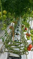 طراحی، ساخت و تجهیز گلخانه در همدان و غرب کشور