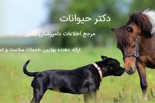 بهترین دامپزشک شیراز - بهترین کلینیک دامپزشکی