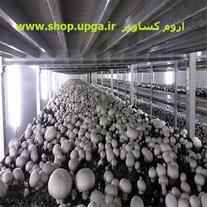 کمپوست و خاک پوششی و بذر قارچ دکمه ای ارومیه