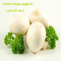 فروش بذر قارچ دکمه ای اروم کشاورز  به همراه کمپوست