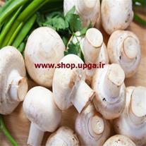 مشاوره و راه اندازی سالن قارچ-بذر قارچ دکمه ای