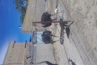 فروش شتر مرغ زنده پرواری