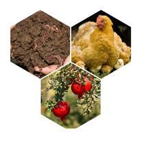 ارسال کود مرغی و کود گاوی به سراسر کشور