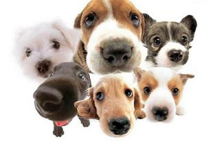 خرید و فروش تخخصی انواع حیوانات خانگی