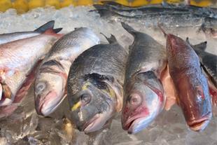فروش مستقیم انواع ماهی تازه جنوب صید روز