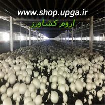 فروش 2 مدل جدید بذر قارچ دکمه ای و صدفی