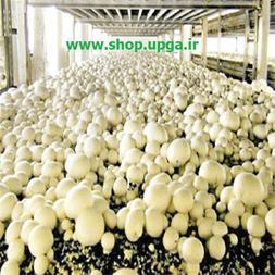 فروش 2 مدل جدید بذر قارچ دکمه ای و صدفی - 1