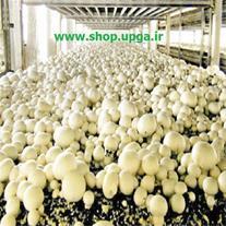 مشاوره و آموزش در تولید و پرورش قارچ