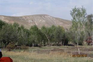 فروش زیر قیمت زمین 21هکتاری کشاورزی در استان البرز