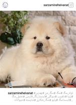 خرید سگ فروش سگ سگ نگهبان