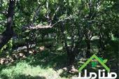 خرید و فروش باغ در کردامیر شهریار کد1348