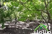 فروش باغ بزرگ در شهریار یبارک کد1350