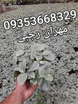 فروش گل و گیاه فروش درخچه به قیمت تولید در شمال
