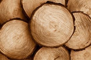 خریدار چوب