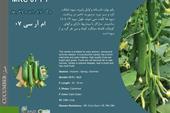 بذر خیار ام آر سی 07 mrc