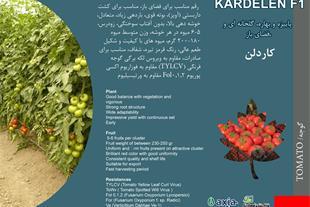 فروش بذر گوجه کاردلن kardelen
