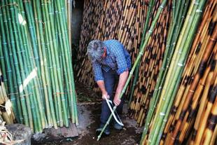 فروش کلی و جزئی چوب بامبو (چوب نی خیزران)