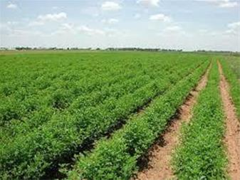 فروش 50 هکتار زمین کشاورزی با دامداری سنددار قزوین - 1