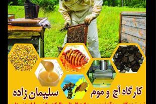 تهیه و فروش عسل
