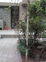 فروش خانه واقع در سیرجان بلوار امام رضاا