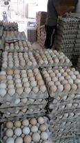 تخم مرغ محلی ارگانیک