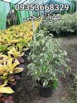 فروش انواع گل و گیاه در تهران( گل و گیاه بیرونی)