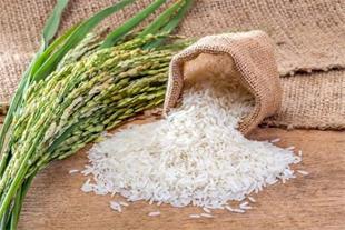 فروش برنج  _برنج هاشمی _ برنج معطر گیلان