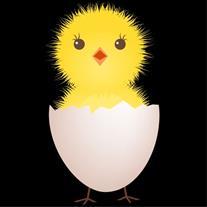 فروش جوجه مرغ یک روزه و نیمچه مرغ محلی وآتاکس