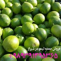 فروش لیمو ترش در استان فارس با شماره 09391495365