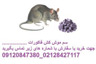 فروش سم موش کش فاکورات