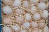فروش تخم مرغ بومی و محلی