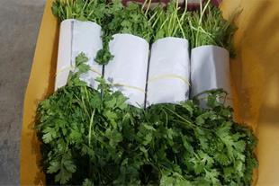 خریدار سبزی تازه با کیفیت برای صادرات
