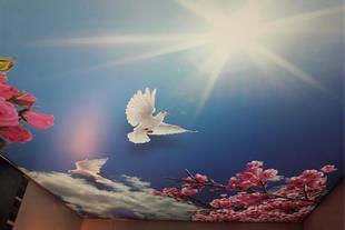 طرح آسمان و پرنده.
