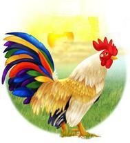 شانه تخم مرغ وکارتن