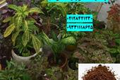 فروش کوکوپیت باغبانی
