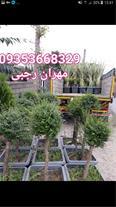 فروش و ارسال گل و گیاه به تمام نقاط کشور