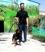 بهترین سگ های گارد ( روتوایلر )