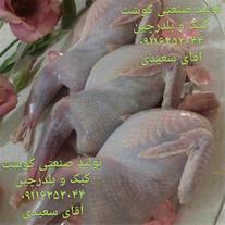 فروش گوشت کبک ، فروش گوشت گرم کبک ، کبک زنده