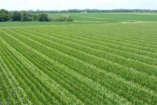 املاک کشاورزی در نظر آباد در شهر صنعتی سپهر