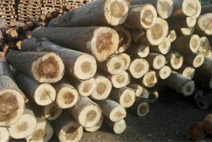 فروش چوب درخت صنوبر