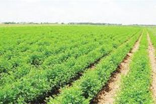 زمین کشاورزی در نظر آباد