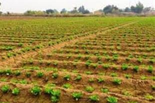زمین کشاورزی در نظرآباد