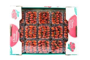 فروش گوجه ارگانیک